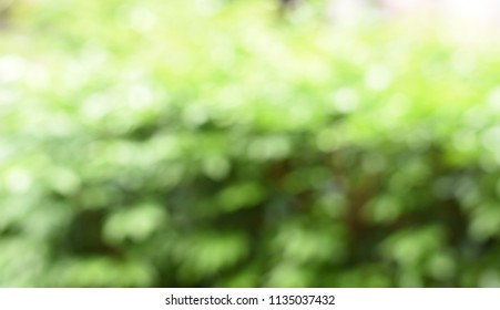 Blurred defocused white bokeh on green for abstract background concept.