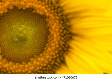 blurred Detail of sunflower