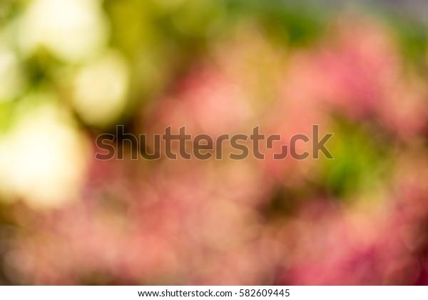 blurred flower bsckground in garden