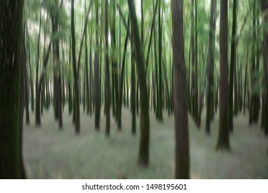 A blurred forest background in the morning