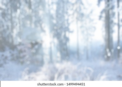 BLURRED FOREST IN FROSTY WINTER