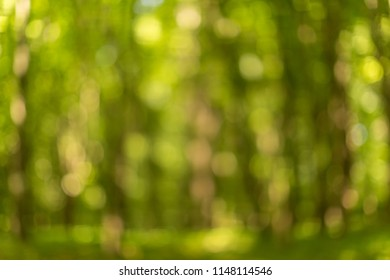 Blurred forest view at summer