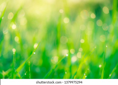 Blurred fresh green grass field in the early morning with morning dew. Water drop on tip of grass leaves in garden. Green grass with bokeh background in spring. Nature background. Clean environment.