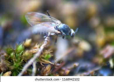 Gnats Bites