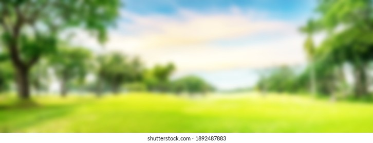 blurred golf course with trees background