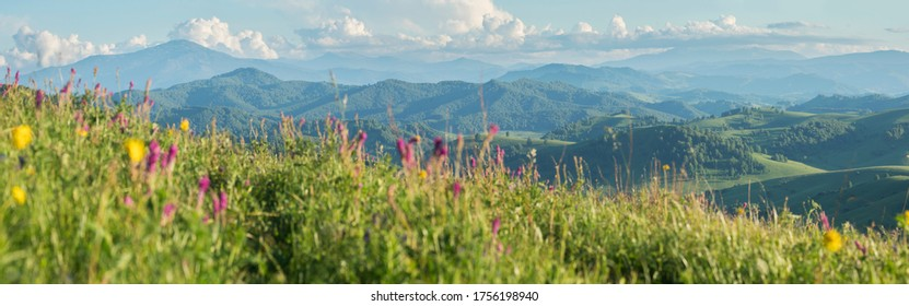 Blurred grass and flowers in the foreground. Blue haze in the mountains, sunny day. Spring landscape. Panoramic view.