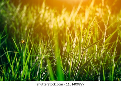 Blurred grass in meadow grass field on light sun morning. It green beautiful grassland in pasture natural countryside.