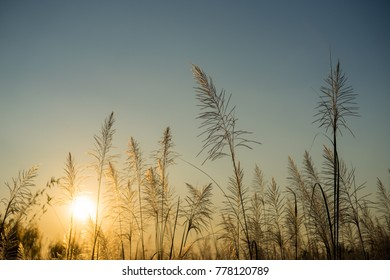 Blurred grass in sunset