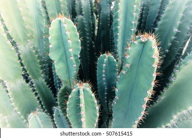 Blurred Green Cactus closeup. Green San Pedro Cactus, thorny fast growing hexagonal shape Cacti perfectly close captured in the desert. Selective Focus. Concept background.