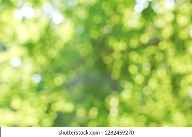 Blurred green garden or forest bokeh background. Green bokeh background.