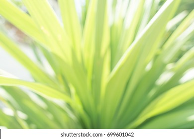 Blurred green leaves background on a sunny day