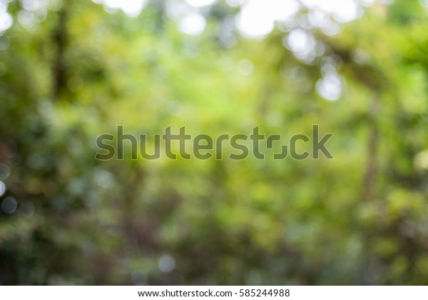 blurred green nature background