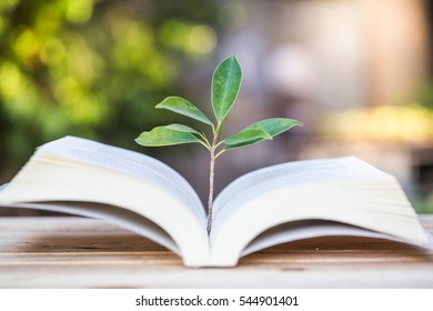 Blurred green plant growing up on book