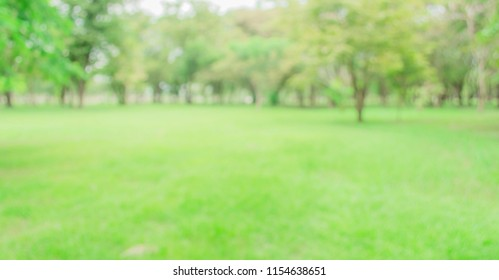 Blurred of green trees lawn light nature abstract, in park background and summer season