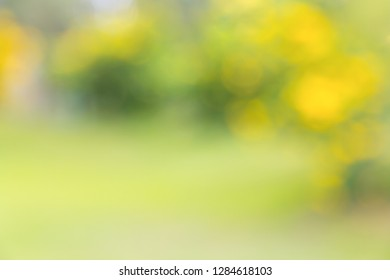 Blurred of green yellow nature tree in park background, day light summer season, soft bokeh. Abstract, wallpaper, eco environment concepts.