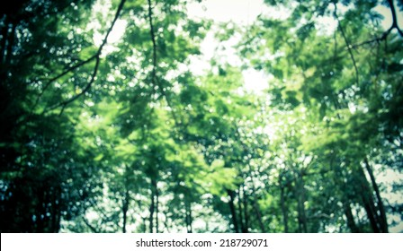 Blurred group of tree in park,Vintage filtered, nature background