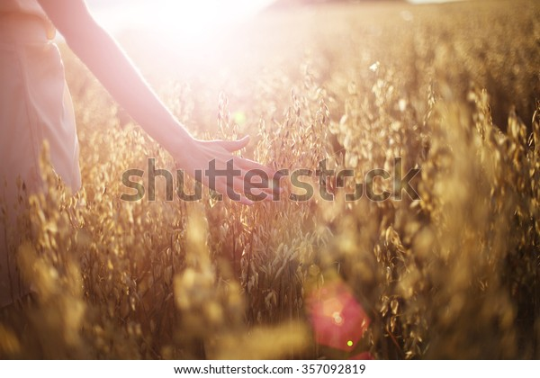 Blurred hand touching wheat spikes with her hand at sunset