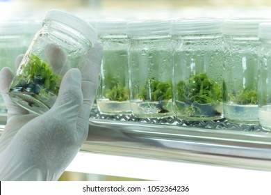 Blurred hand working in life science laboratory. plants growing in glass pot. Biology laboratory plants. Plants science in lab.