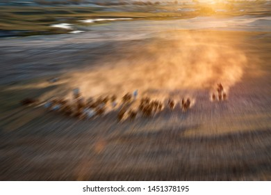 Blurred Horse herd run fast in desert dust against dramatic sunset sky