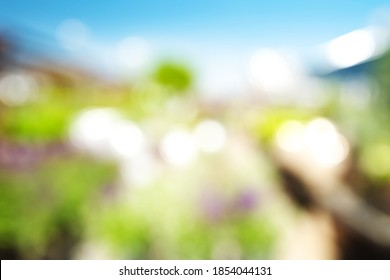 BLURRED HORTICULTURE STORE BACKGROUND, GREEN PLANTS WITH BOKEH LIGHTS AT OUTDOOR SALE AREA