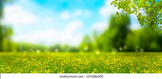blurred idyllic springtime landscape, blue sky and flower meadow under the leaf branch, a carpet of yellow cheerful blossoms, blurred spring background