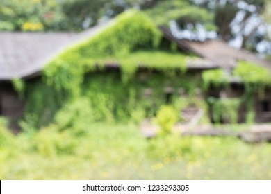 Blurred image An abandoned old wooden house covered with ivy and green grass