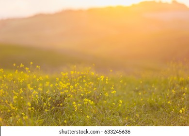 Blurred image of a field with flowers, hills and sunset at the background.