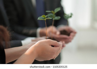 blurred image of a fresh sprout in the hands of the business team