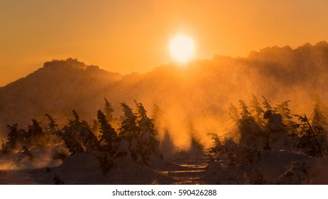 Blurred image of great snowstorm in mountains in the national park at sunset, yellow sun over fir trees covered by snow, Russian cold winter