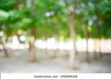 Blurred image of a park with sunlight. Defocused garden with bokeh.