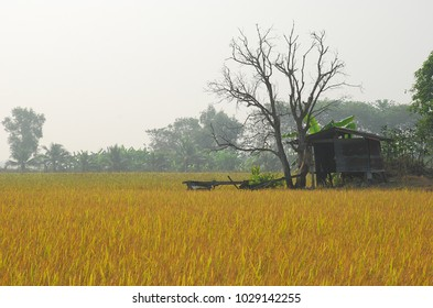 blurred image rice field and  cottage with fog in moring time