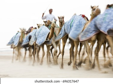 blurred image of  running camels at a camel track in a desert