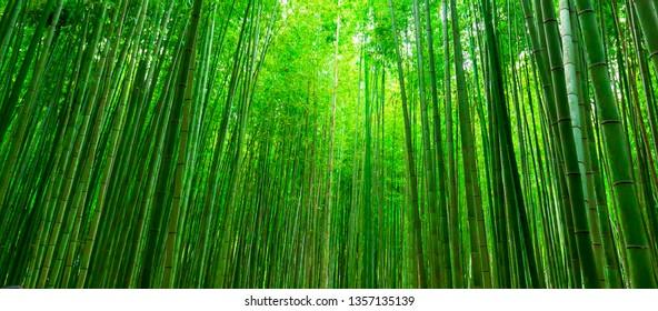 Blurred images of bamboo forest in Arashiyama,Kyoto,Japan.