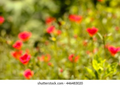 Blurred images of flowering portulaca oleracea on natural grassland.
