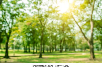 Blurred images public green trees lawn light nature abstract, in park background and summer season