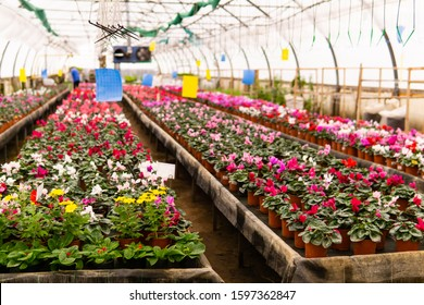 blurred interior of an industrial floriculture greenhouse with flower beds in the foreground