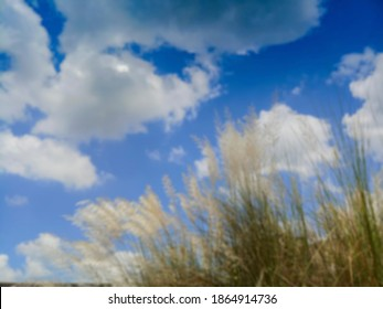 Blurred Kaash ful or Kans grass gyrating in breeze, Saccharum spontaneum, blue sky and white clouds of autumn season in background , Kolkata, West Bengal, India.