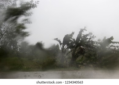 Blurred leaning tree which is caused by a strong wind, blows with rain.