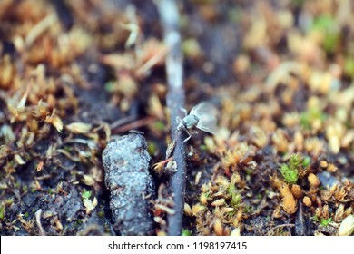 Blurred. Midge close-up in tundra. most harmful insect for humans in the North. Ceratopogonidae