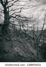 blurred monochrome dark vintage style image of spooky twisted winter trees at twilight on a steep woodland hill