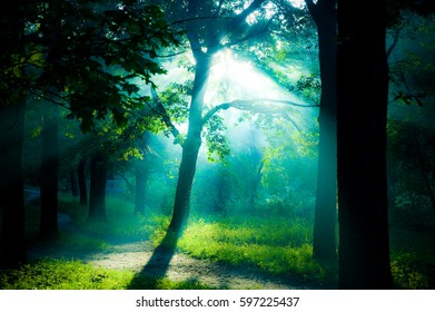 The blurred morning spring forest in the haze and the rays of the sun shine through the foliage from above