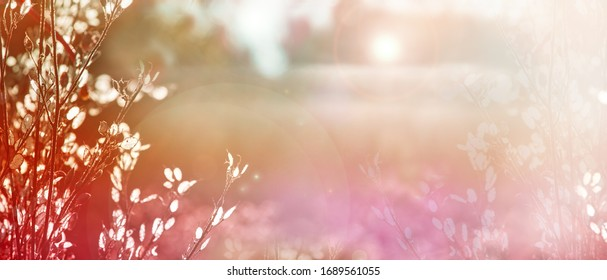 Blurred natural background. Delicate natural background in pastel colors with a soft pink accent. Dried flowers in nature. Delicate colors, copy space. Sunny day. Spring background.