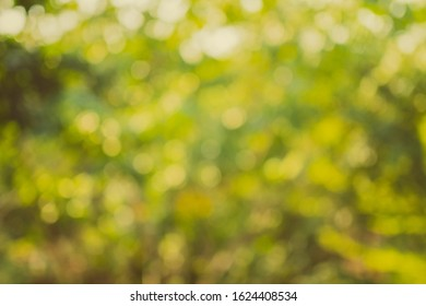 Blurred natural background / greenish-yellow various leaves in sun light among garden or forest. Green bokeh background.