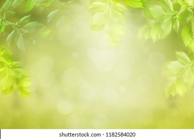 Blurred nature background, frame of green leaves, tree branches