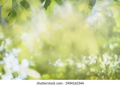 Blurred nature background with green tree leaves