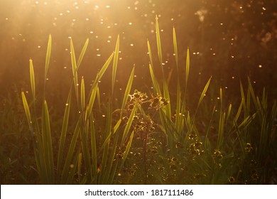 Blurred nature background. Small midges fly in the rays of light. Insects swarm in the rays of the setting sun. Mosquitoes. Beautiful nature, shining shimmering sundown in autumn forest. Golden sunset
