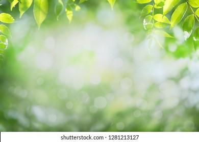 Blurred nature background, tree leaves frame