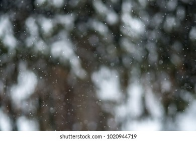 Blurred out forrest on snowy day winter background. Snowflakes in focus.