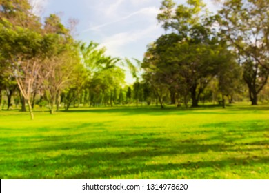 Blurred photo Garden lawn with tall green trees garden mornings time