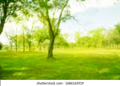 Blurred photo. Green trees, forests and sunlight. Green lawn image